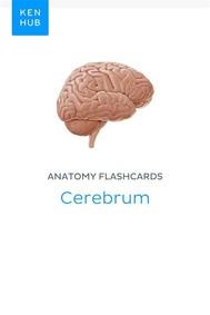 Anatomy flashcards: Cerebrum - copertina
