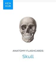 Anatomy flashcards: Skull - copertina