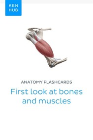 Anatomy flashcards: First look at bones and muscles - copertina