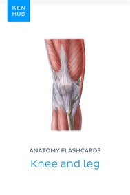 Anatomy flashcards: Knee and leg - copertina