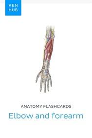 Anatomy flashcards: Elbow and forearm - copertina