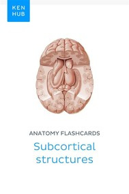 Anatomy flashcards: Subcortical structures - copertina