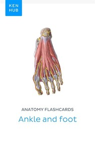 Anatomy flashcards: Ankle and foot - copertina