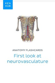 Anatomy flashcards: First look at neurovasculature - copertina
