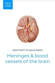 Anatomy flashcards: Meninges & blood vessels of the brain - copertina