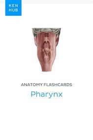 Anatomy flashcards: Pharynx - copertina