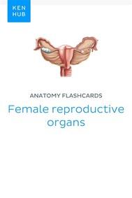 Anatomy flashcards: Female reproductive organs - copertina