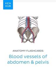 Anatomy flashcards: Blood vessels of abdomen & pelvis - copertina