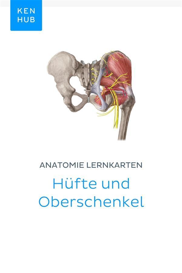 Anatomie Lernkarten: Hüfte und Oberschenkel, Kenhub | Ebook Bookrepublic
