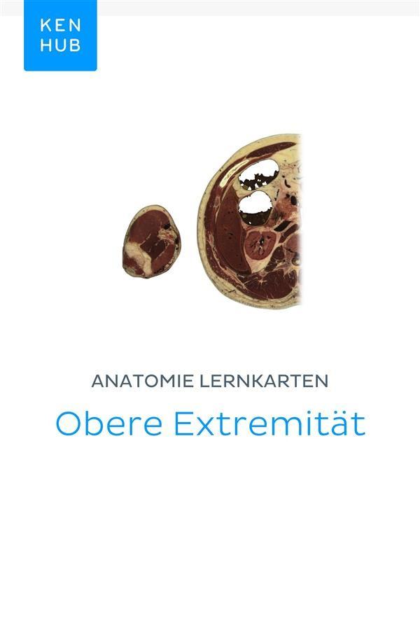 Ungewöhnlich Obere Extremität Anatomie Mnemonik Galerie ...