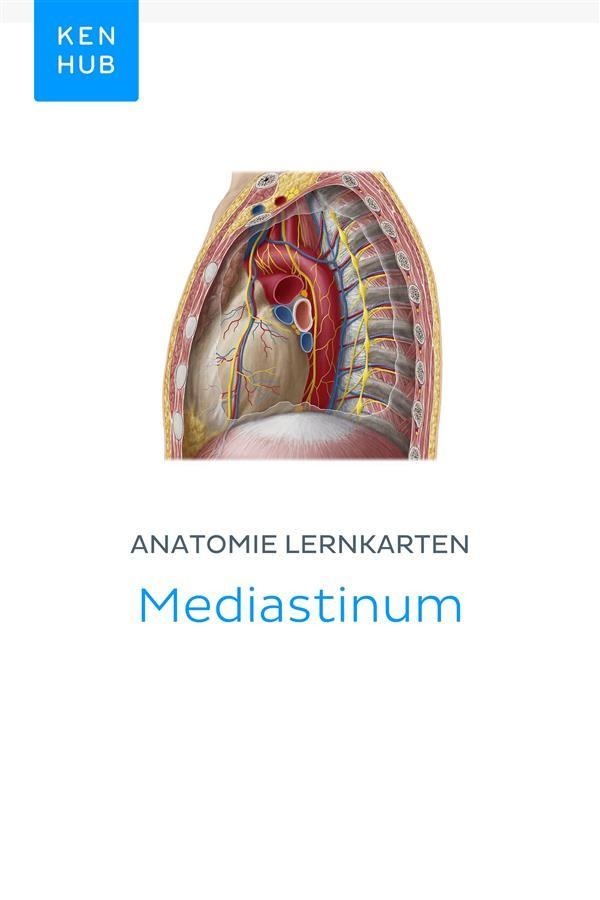 Atemberaubend Bronchiale Anatomie Ct Galerie - Anatomie Ideen ...