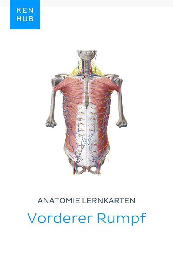 Ungewöhnlich Anatomie Und Physiologie Hörbuchs Frei Ideen ...