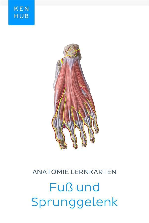 Anatomie Lernkarten: Fuß und Sprunggelenk, Kenhub | Ebook Bookrepublic