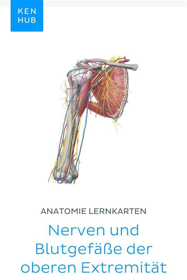 Tolle Anatomie Und Physiologie Der Blutgefäße Zeitgenössisch ...