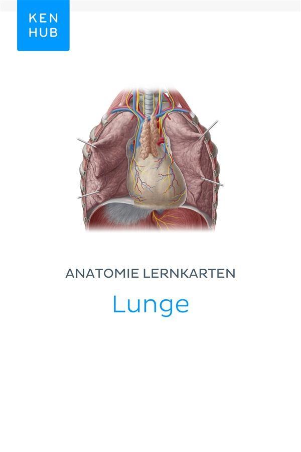 Fantastisch Anatomie Der Lunge Video Fotos - Anatomie Von ...