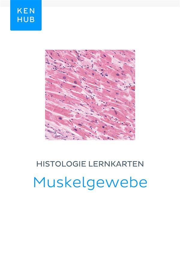 Histologie Lernkarten: Muskelgewebe, Kenhub | Ebook Bookrepublic