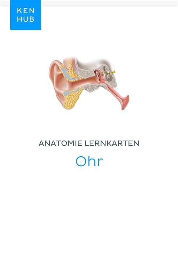 Nett Anatomie Des Herzens Lernkarten Zeitgenössisch - Anatomie Ideen ...