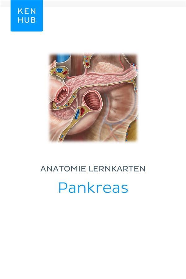 Niedlich Beste Anatomie Lernkarten Galerie - Menschliche Anatomie ...