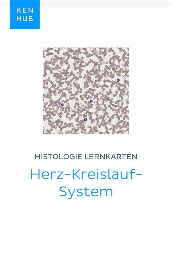 Histologie Lernkarten: Herz-Kreislauf-System, Kenhub | Ebook ...