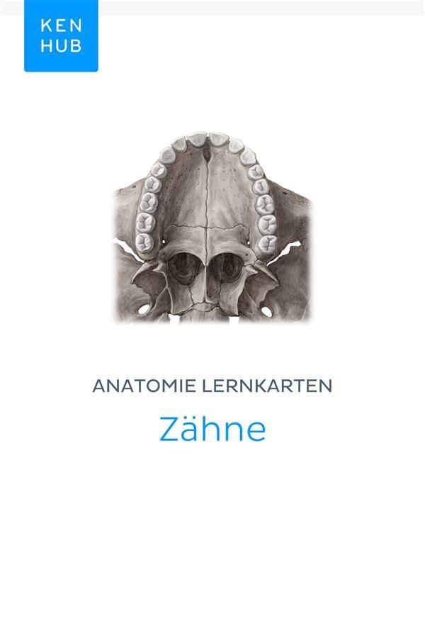 Anatomie Lernkarten: Zähne, Kenhub   Ebook Bookrepublic