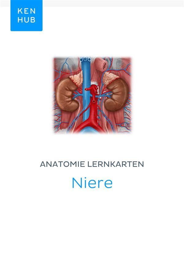 Charmant Funktion Des Harnsystems Bilder - Anatomie Ideen - finotti.info