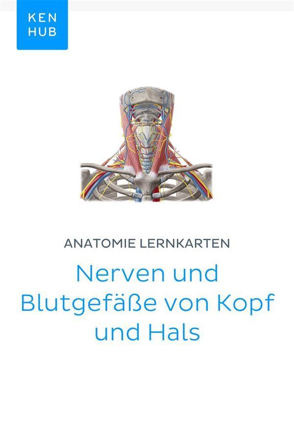 Wunderbar Blutgefäße Im Hals Ideen - Menschliche Anatomie Bilder ...