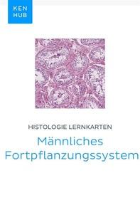Histologie Lernkarten: Männliches Fortpflanzungssystem - Librerie.coop