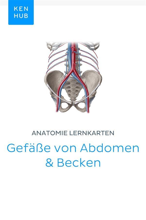 Anatomie Lernkarten: Gefäße von Abdomen & Becken, Kenhub | Ebook ...
