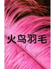 火鸟羽毛 - copertina