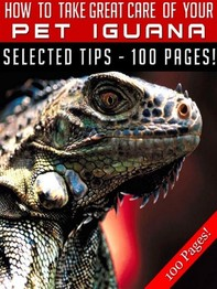 How To Take Great Care Of Your Pet Iguana - Librerie.coop