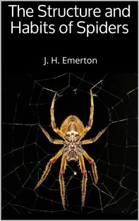 The Structure and Habits of Spiders - Librerie.coop