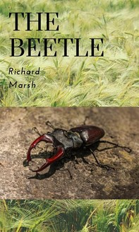 The Beetle - Librerie.coop