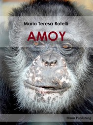 Amoy - copertina