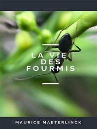 La Vie des Fourmis - Librerie.coop